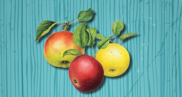 Pommes du terroir