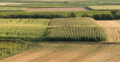 Préserver les espaces et les emplois agricoles - PLAA